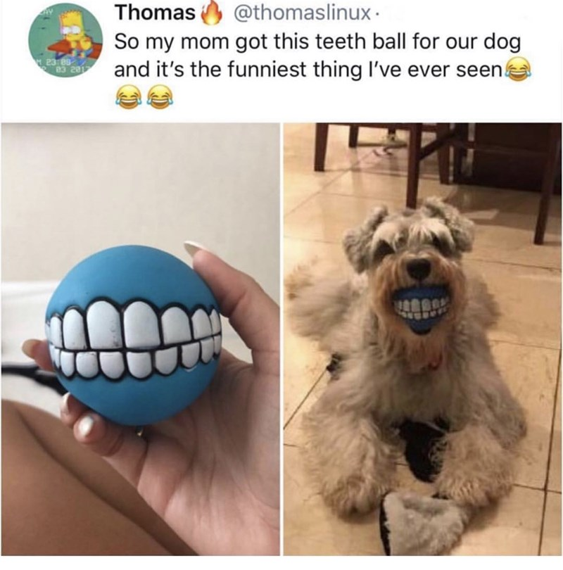 Dog toy - Thomas @thomaslinux So my mom got this teeth ball for our dog and it's the funniest thing I've ever seen 23 88