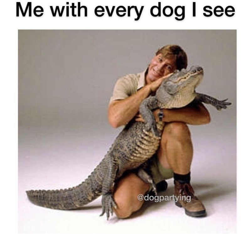 Reptile - Me with every dog I see @dogpartying