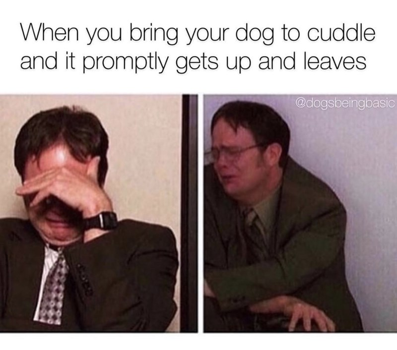 """Meme - """"When you bring your dog to cuddle and it promptly gets up and leaves"""""""