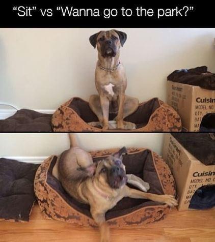 """Dog - """"Sit"""" vs """"Wanna go to the park?"""" Cuisin MODEL NO OTY BAT MA Cuisin MODEL NOC ATY BAT MA"""