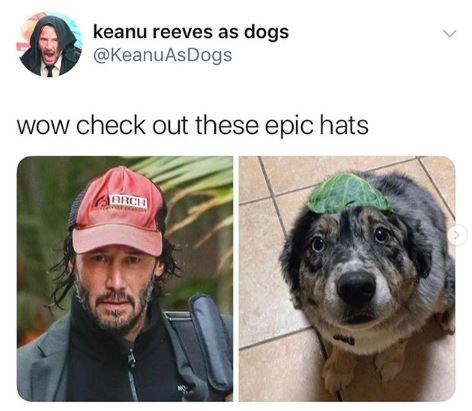 Canidae - keanu reeves as dogs @KeanuAsDogs wow check out these epic hats ARCH