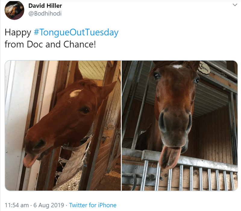 Horse - David Hiller @Bodhihodi Happy #TongueOutTuesday from Doc and Chance! Chance 11:54 am 6 Aug 2019 Twitter for iPhone