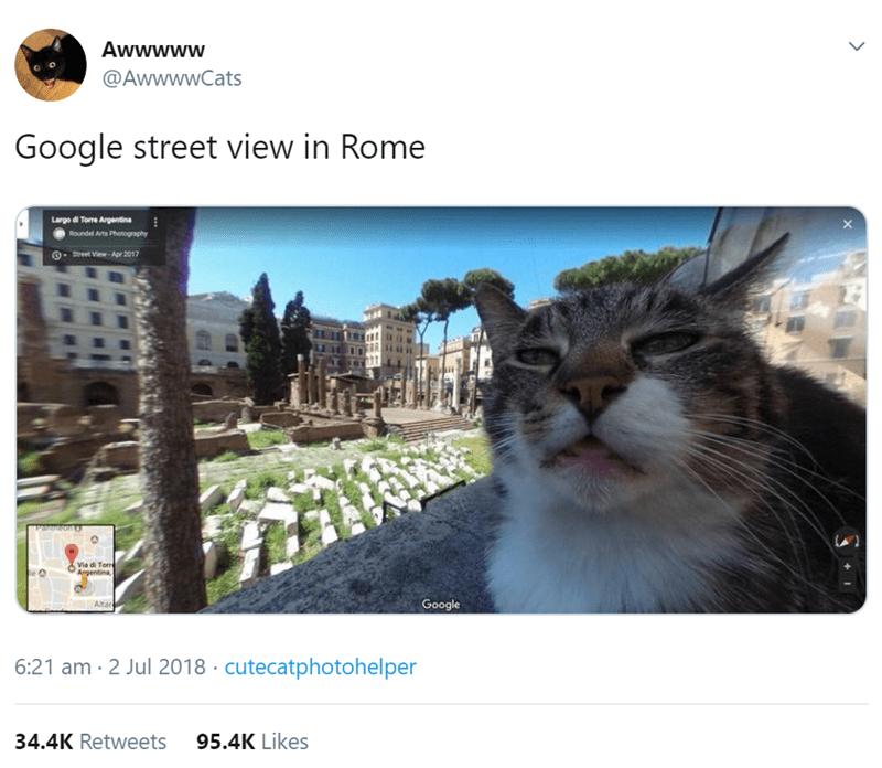 Cat - Awwwww @AwwwwCats Google street view in Rome Large d Toe Argentina Roundel Arts Photography Street View-Apr 2017 Peon Via di Torm Argentina, Altar Google 6:21 am 2 Jul 2018 cutecatphotohelper 34.4K Retweets 95.4K Likes