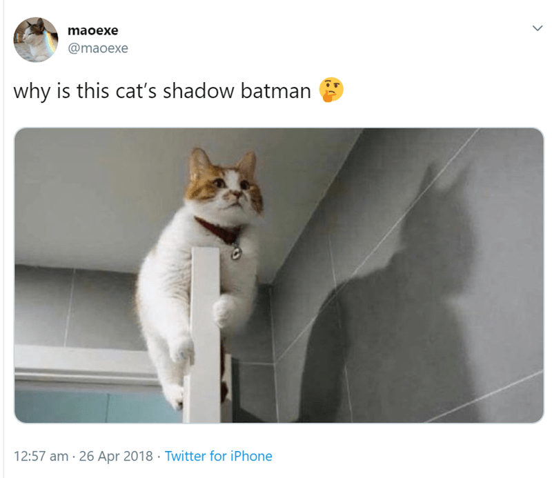 Cat - maoexe @maoexe why is this cat's shadow batman 12:57 am 26 Apr 2018 Twitter for iPhone