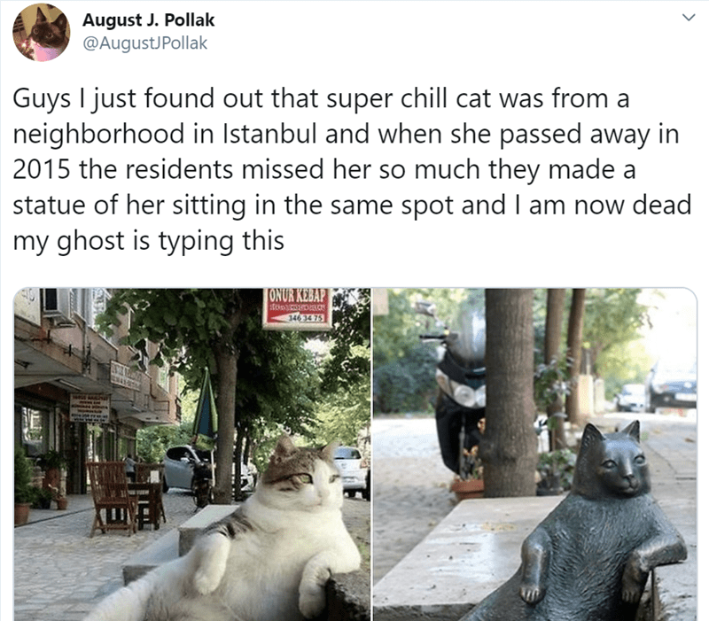 Adaptation - August J. Pollak @AugustJPollak Guys I just found out that super chill cat was from a neighborhood in Istanbul and when she passed away in 2015 the residents missed her so much they made a statue of her sitting in the same spot and I am now dead my ghost is typing this ONUR KEBAP 346 34 75
