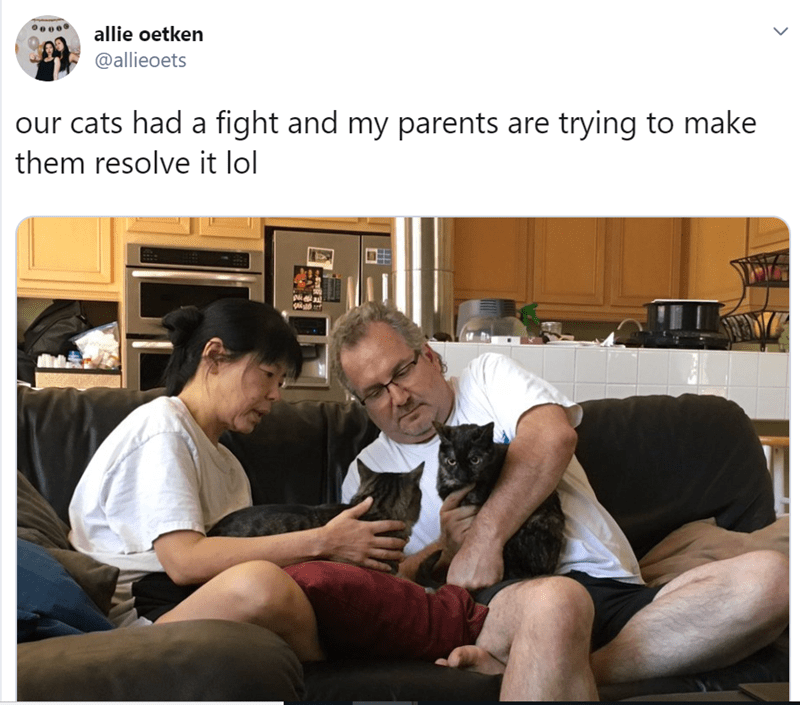 Photo caption - allie oetken @allieoets our cats had a fight and my parents are trying to make them resolve it lol