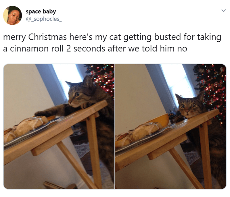 Adaptation - space baby @_Sophocles_ merry Christmas here's my cat getting busted for taking a cinnamon roll 2 seconds after we told him no
