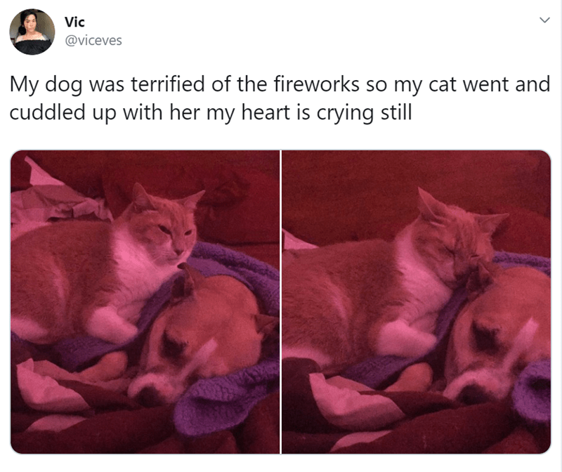 Cat - Vic @viceves My dog was terrified of the fireworks so my cat went and cuddled up with her my heart is crying still