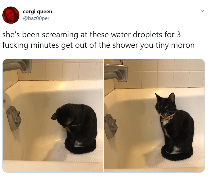 Black cat - corgi queen @baz00per she's been screaming at these water droplets for 3 fucking minutes get out of the shower you tiny moron