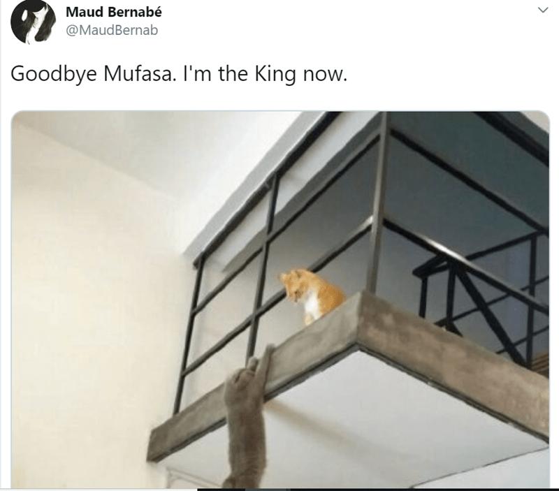 Iron - Maud Bernabé @MaudBernab Goodbye Mufasa. I'm the King now.
