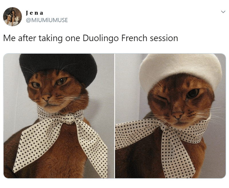 Cat - Jen a @MIUMIUMUSE Me after taking one Duolingo French session