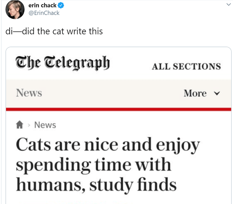 Text - erin chack @ErinChack di-did the cat write this The Telegraph ALL SECTIONS News More ANews Cats are nice and enjoy spending time with humans, study finds