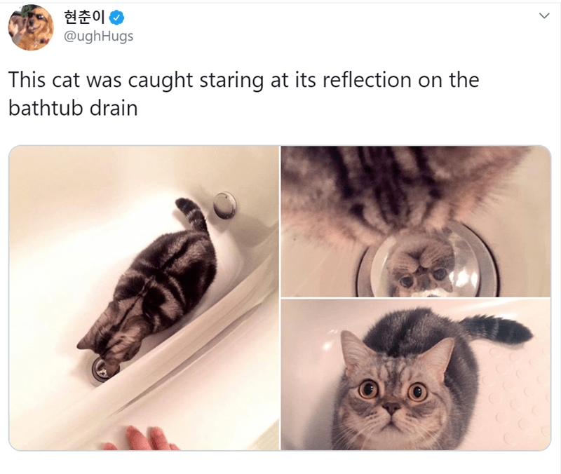 Cat - 현춘이 @ughHugs This cat was caught staring at its reflection on the bathtub drain