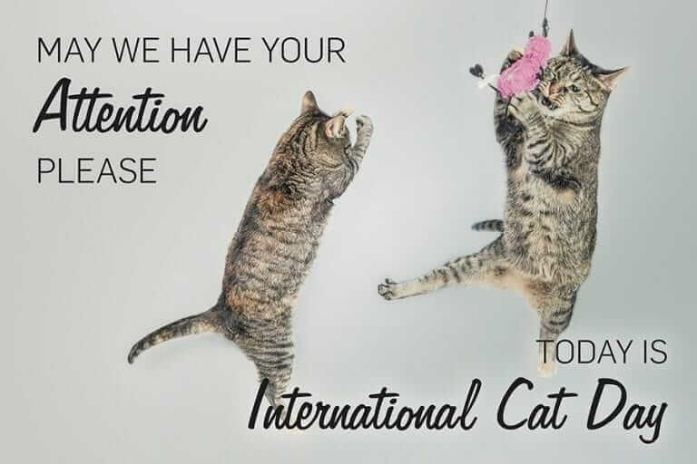 cat photos - 9342371328