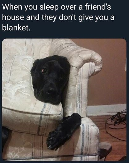 Dog - When you sleep over a friend's house and they don't give you a blanket.