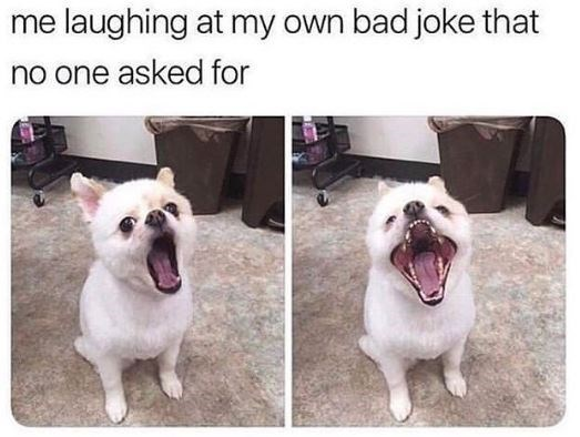 Dog breed - laughing at my own bad joke that no one asked for