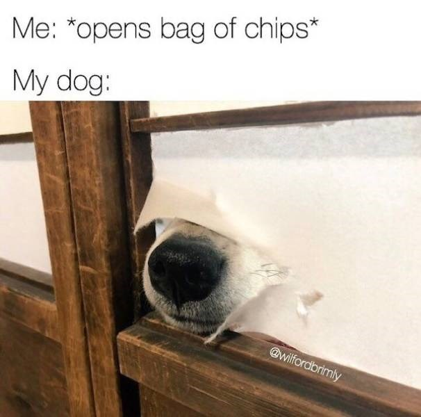 Nose - Me: *opens bag of chips* My dog: @wilfordbrimly
