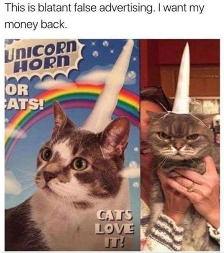 cat meme - Cat - This is blatant false advertising. I want my money back. UNICORN HORN OR ATS! CATS LOVE T!