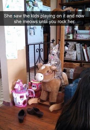 cat meme - Toy - She saw the kids playing on it and now she meows until you rock her