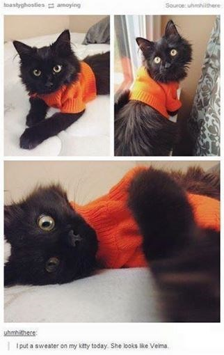 cat meme - Cat - toastyghosties arnoying Source: uhmhilthere uhmhithere put a sweater on my kitty today. She looks like Velma
