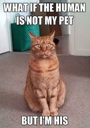 cat meme - Cat - WHAT IF THE HUMAN IS NOT MY PET BUTIM HIS