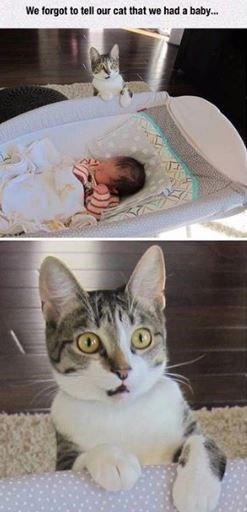 cat meme - Cat - We forgot to tell our cat that we had a baby...