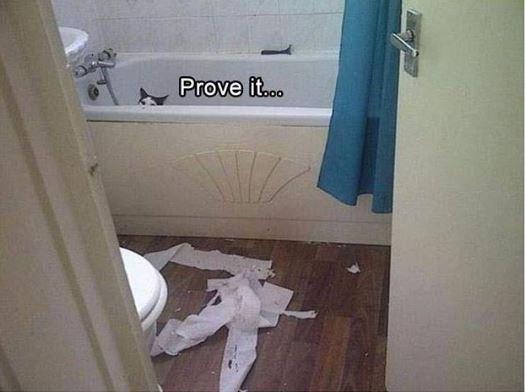 cat meme - Room - Prove it..