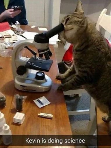 cat meme - Cat - Kevin is doing science