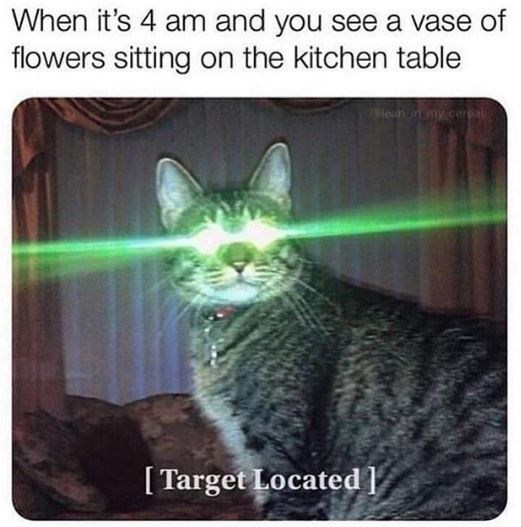 cat meme - Cat - When it's 4 am and you see a vase of flowers sitting on the kitchen table enmy cer [Target Located