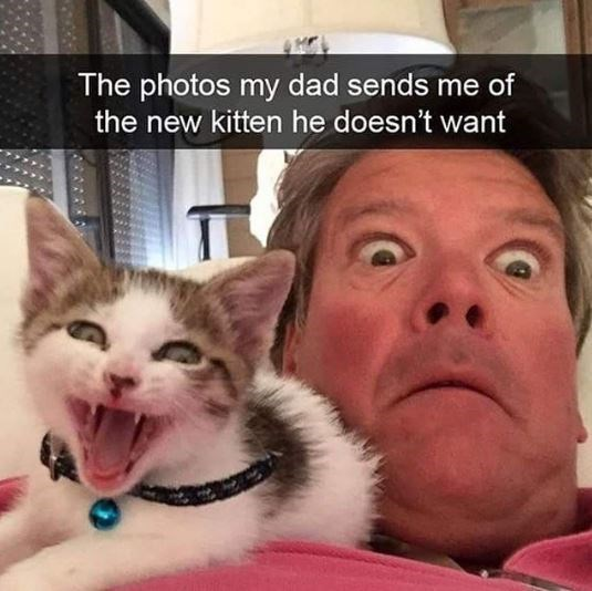 cat meme - Cat - The photos my dad sends me of the new kitten he doesn't want