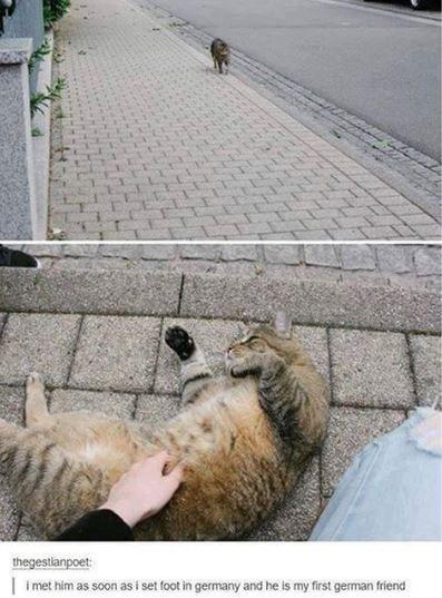 cat meme - Cat - thegestlanpoet: i met him as soon as i set foot in germany and he is my first german friend