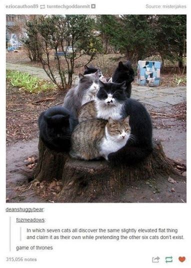 cat meme - Photo caption - eziocauthon89 turntechgoddanmit Source misterjakes deanshuggybear fozmeadows In which seven cats all discover the same slightly elevated flat thing and claim it as their own while pretending the other six cats don't exist game of thrones 315,056 notes