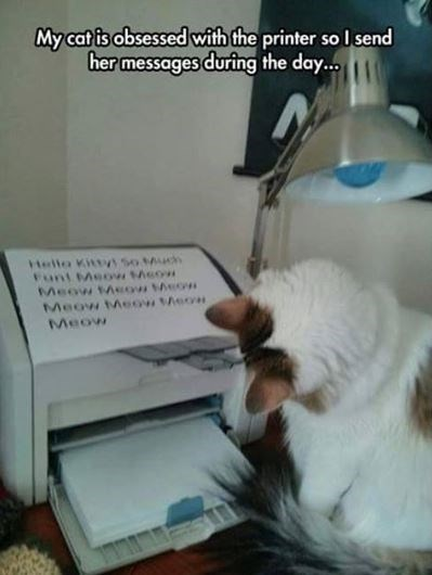 cat meme - Cat - My cat is obsessed with the printer so I send her messages during the day... Helto Kittvs soMu Funt Meow heow Meow tAsow heo Meow MAeow eo moan