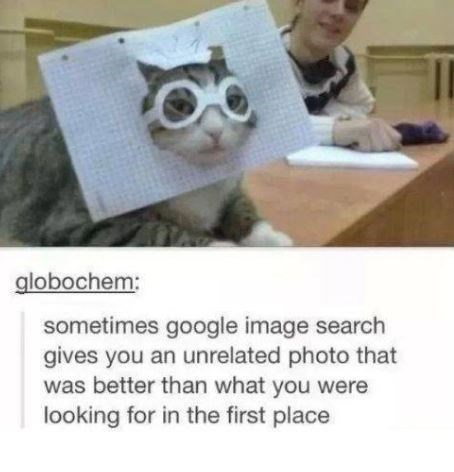cat meme - Photo caption - globochem: sometimes google image search gives you an unrelated photo that was better than what you were looking for in the first place