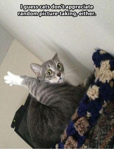 cat meme - Cat - Oguess cats donftappreciate random picture-taking,either