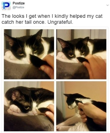 cat meme - Cat - Postize P @Postize The looks I get when I kindly helped my cat catch her tail once. Ungrateful