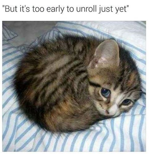 """cat meme - Cat - """"But it's too early to unroll just yet"""""""