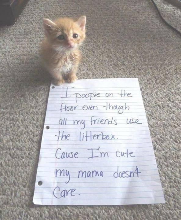 cat memes - 9342483968