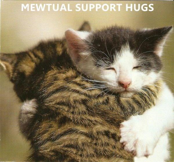 Cat - MEWTUAL SUPPORT HUGS