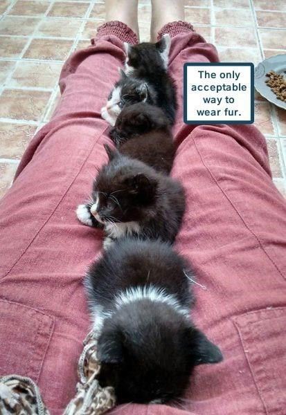 Cat - The only acceptable way to wear fur
