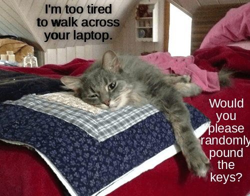 Cat - I'm too tired to walk across your laptop. Would you please randomly pound the keys?