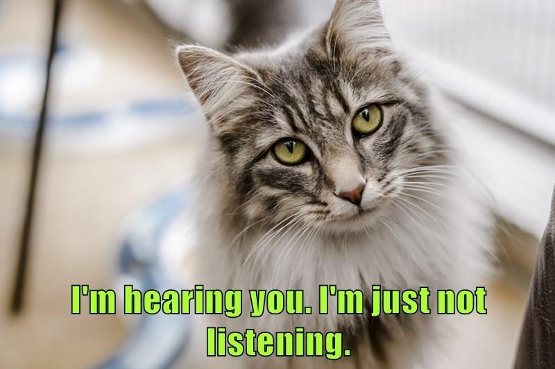 Cat - I'm hearing you. I'm just not listening.