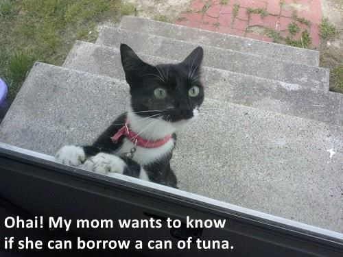 Cat - Ohai! My mom wants to know if she can borrow a can of tuna