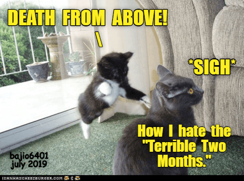 """Photo caption - DEATH FROM ABOVE! SIGH How I hate the """"Terrible Two Months."""" bajio6401 july 2019 ICANHASCHEEZBURGER.OOM"""