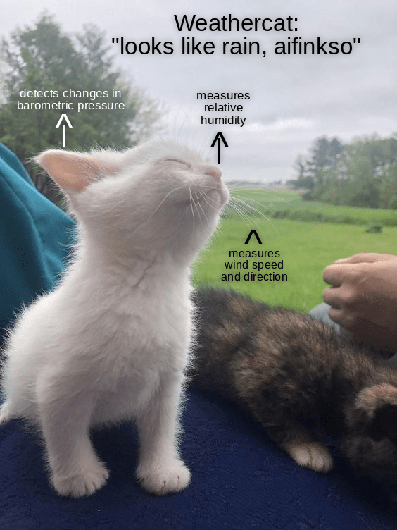"""Cat - Weathercat: """"looks like rain, aifinkso"""" detects changes in barometric pressure measures relative humidity measures wind speed and direction"""