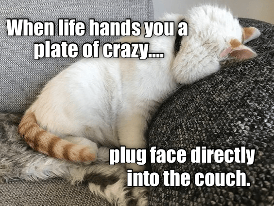 Cat - When life hands you a plate of crazy.. plug face directly into the couch