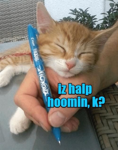 Cat - iz halp hoomin, k? FAIXION Mar PLOT