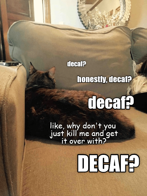 Cat - decaf? honestly, decaf? decaf? like, why don't you just kill'me and get it over with? DECAF?