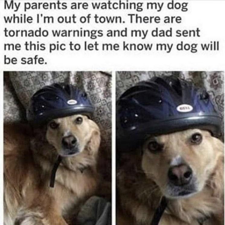 dog memes - 9342495232