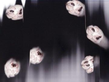 cat scan - Head
